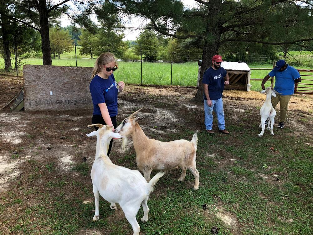 Stephanie feeding goats